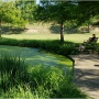Northwest District Park: Revitalizing Pond Edge Plantings