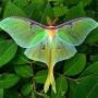 Animals Garden Monarch Waystation & Doula Gift Garden