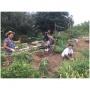 January Festival Beach Community Garden Workday