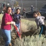 Tree Planting on UNR Campus
