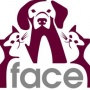 Volunteer at FACE Low-Cost Animal Clinic