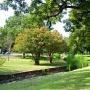 Adams-Hemphill Park Tree Mulching