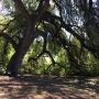 Pease Cub Scouts - Duncan Park tree mulching