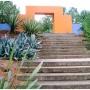 Ethnobotanical Garden Weed-pulling Fest!