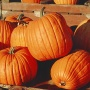 SUMC Pumpkin Patch Unload