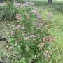 Northwest District Park:  Planting Natives at the Pond